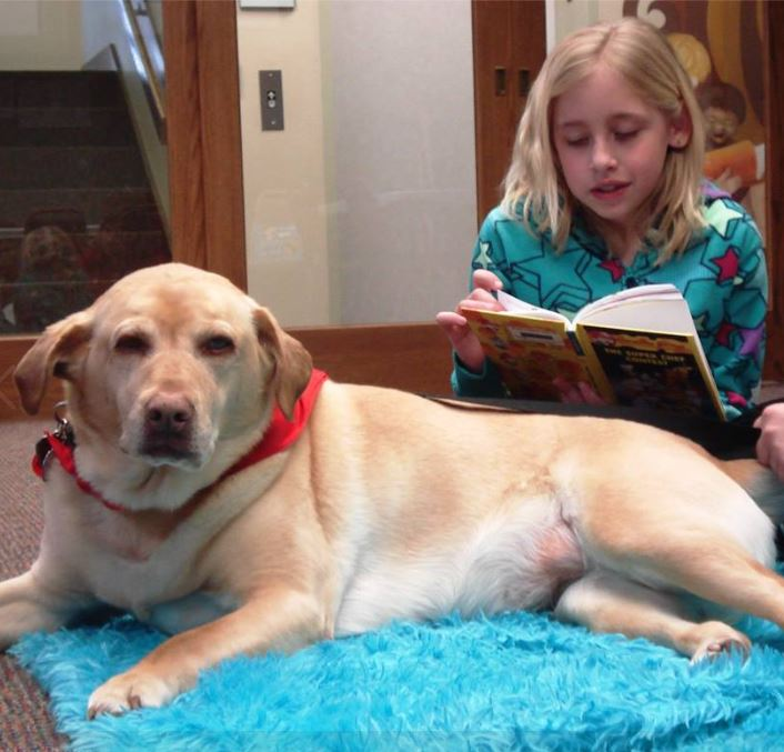 a child reading to a golden lab